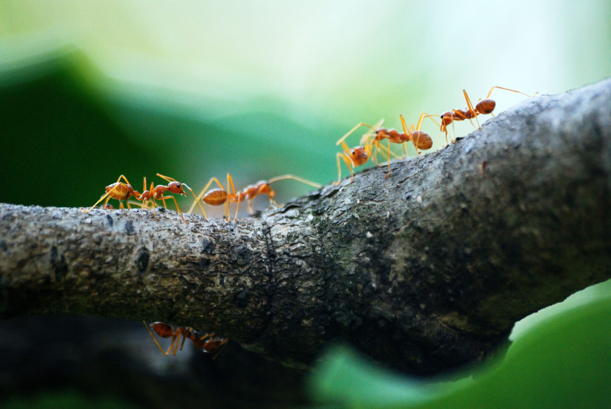 Why Does My Home Keep Getting Ants, Again and Again?